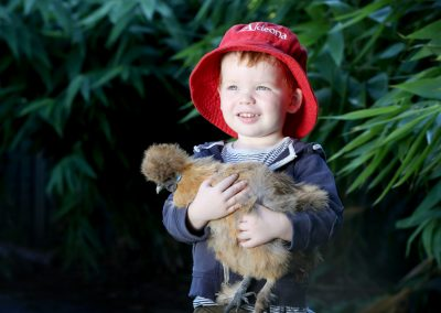 chickens in the garden at adeona mitchelton childcare