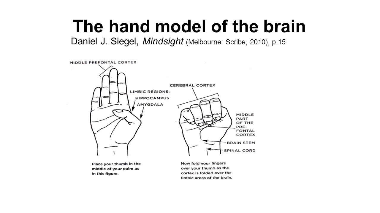 Daniel J Siegel The Hand Model of the Brain